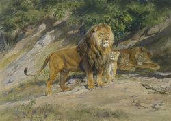 Rosa_Bonheur_The_King_watches_1887